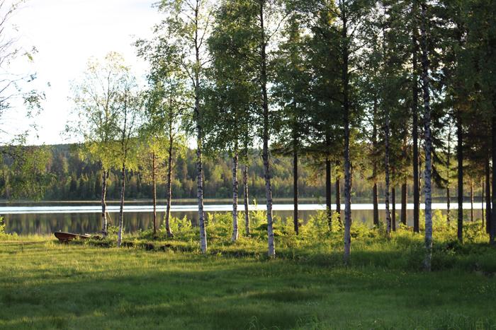 skogssjö och eka