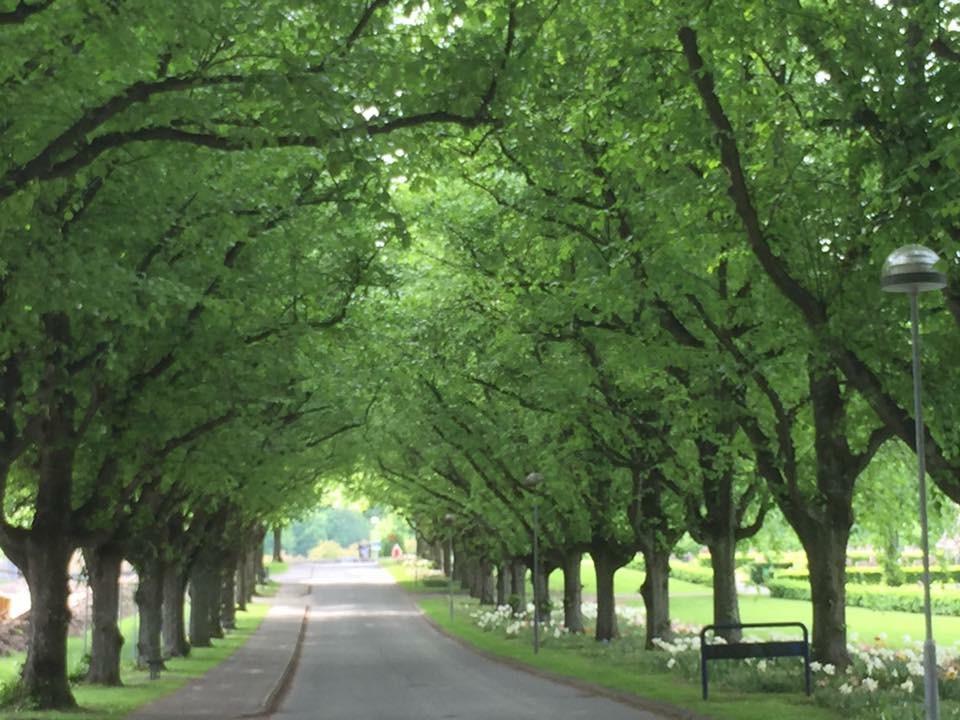 Trädalle`på kyrkogården