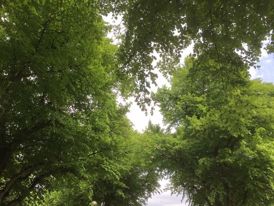 Gröna trädkronor mot himlen!